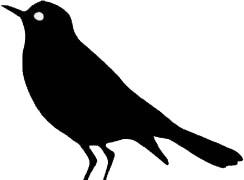 Vogel-Connect logopedie zwart