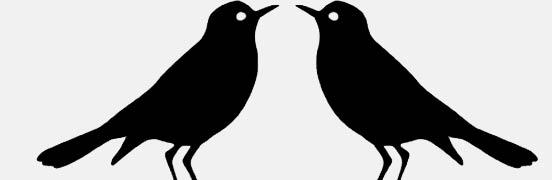 birds-footer